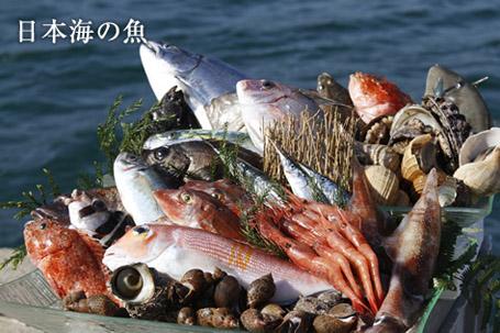 日本海の魚